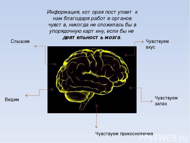 Информация, которая поступает к нам благодаря работе органов чувств, никогда не сложилась бы в упорядочную картину, если бы не деятельность мозга. Слышим Видим Чувствуем вкус Чувствуем запах Чувствуем прикосновения