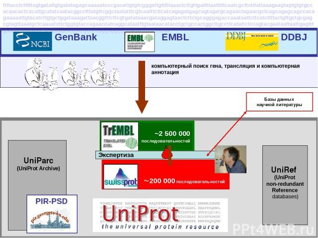 ~2 500 000 последовательностей компьютерный поиск гена, трансляция и компьютерная аннотация UniRef (UniProt non-redundant Reference databases) UniParc (UniProt Archive) 200 000 последовательностей Экспертиза Базы данных научной литературы