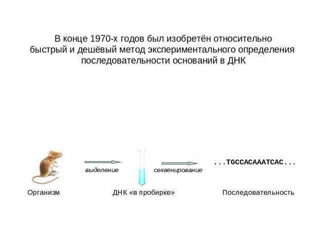 В конце 1970-х годов был изобретён относительно быстрый и дешёвый метод экспериментального определения последовательности оснований в ДНК Организм ДНК «в пробирке» Последовательность выделение секвенирование ...TGCCACAAATCAC...