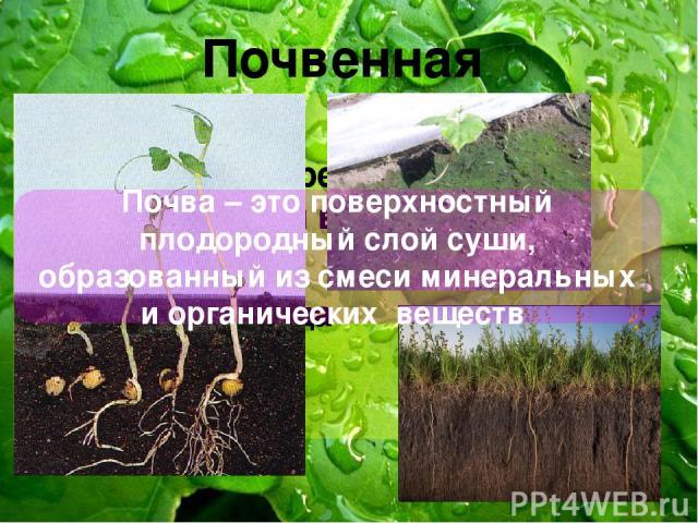 Почвенная Нет света Небольшие перепады температуры и влажности в течении суток Мало кислорода Почва – это поверхностный плодородный слой суши, образованный из смеси минеральных и органических веществ