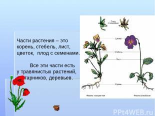 Части растения – это корень, стебель, лист, цветок, плод с семенами. Все эти час