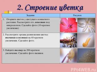 2. Строение цветка Задание Рисунок Оторвите цветок у цветущего комнатного растен