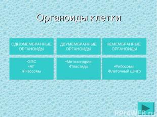 Органоиды клетки ОДНОМЕМБРАННЫЕ ОРГАНОИДЫ ДВУМЕМБРАННЫЕ ОРГАНОИДЫ НЕМЕМБРАННЫЕ О