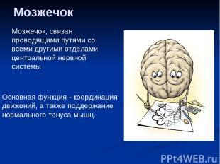 Мозжечок Мозжечок, связан проводящими путями со всеми другими отделами центральн