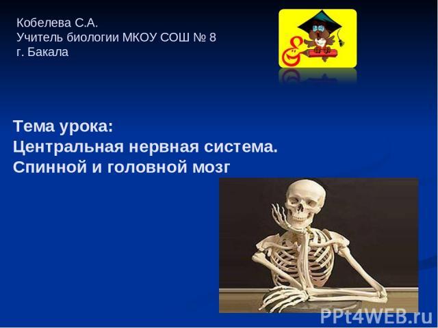 Кобелева С.А. Учитель биологии МКОУ СОШ № 8 г. Бакала Тема урока: Центральная нервная система. Спинной и головной мозг