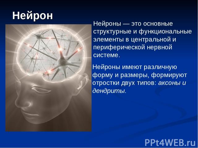 Нейрон Нейроны — это основные структурные и функциональные элементы в центральной и периферической нервной системе. Нейроны имеют различную форму и размеры, формируют отростки двух типов: аксоны и дендриты.