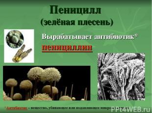 Пеницилл (зелёная плесень) Вырабатывает антибиотик* пенициллин *Антибиотик – вещ
