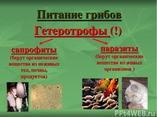Питание грибов сапрофиты (берут органические вещества из неживых тел, почвы, про