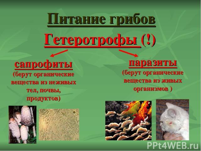 Питание грибов сапрофиты (берут органические вещества из неживых тел, почвы, продуктов) паразиты (берут органические вещества из живых организмов ) Гетеротрофы (!)