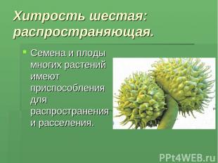 Хитрость шестая: распространяющая. Семена и плоды многих растений имеют приспосо