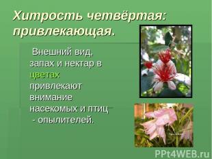 Хитрость четвёртая: привлекающая. Внешний вид, запах и нектар в цветах привлекаю