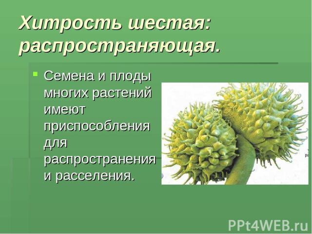 Хитрость шестая: распространяющая. Семена и плоды многих растений имеют приспособления для распространения и расселения.