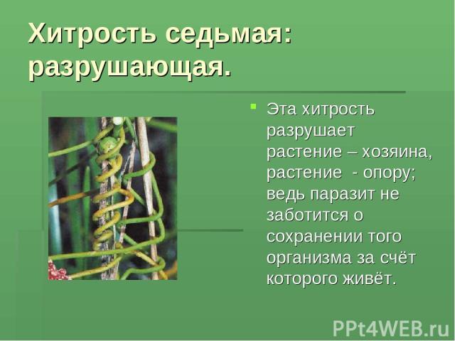 Хитрость седьмая: разрушающая. Эта хитрость разрушает растение – хозяина, растение - опору; ведь паразит не заботится о сохранении того организма за счёт которого живёт.