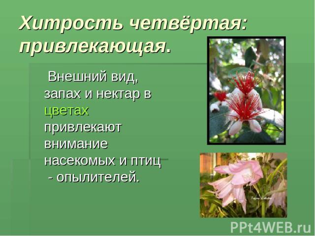 Хитрость четвёртая: привлекающая. Внешний вид, запах и нектар в цветах привлекают внимание насекомых и птиц - опылителей.