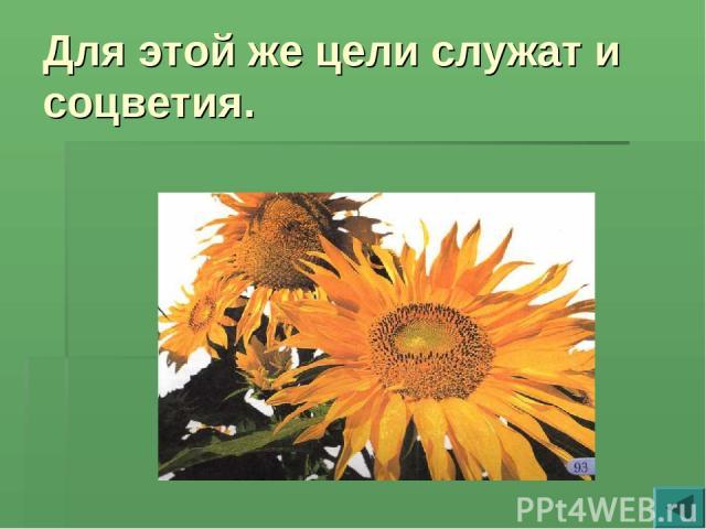 Для этой же цели служат и соцветия.
