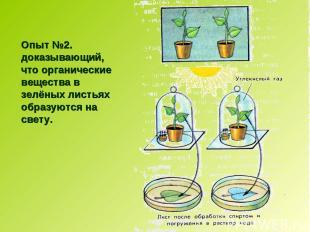Опыт №2. доказывающий, что органические вещества в зелёных листьях образуются на