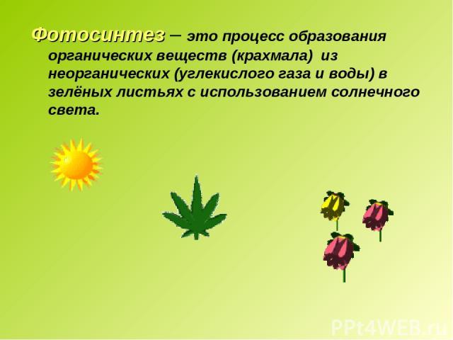 Фотосинтез – это процесс образования органических веществ (крахмала) из неорганических (углекислого газа и воды) в зелёных листьях с использованием солнечного света.