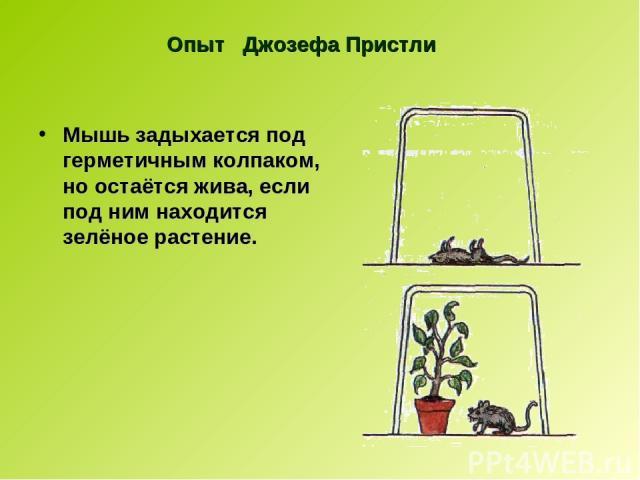 Опыт Джозефа Пристли Мышь задыхается под герметичным колпаком, но остаётся жива, если под ним находится зелёное растение.