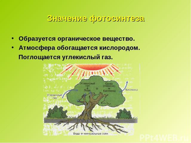 Значение фотосинтеза Образуется органическое вещество. Атмосфера обогащается кислородом. Поглощается углекислый газ.