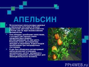АПЕЛЬСИН Вечнозеленые апельсиновые деревья с овальными листьями и белыми душисты