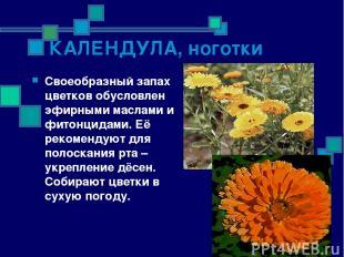 КАЛЕНДУЛА, ноготки Своеобразный запах цветков обусловлен эфирными маслами и фито