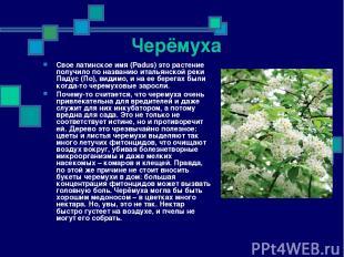 Черёмуха Свое латинское имя (Padus) это растение получило по названию итальянско