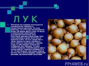 Л У К Репчатый лук издавна используется человеком как пищевое и лекарственное ра
