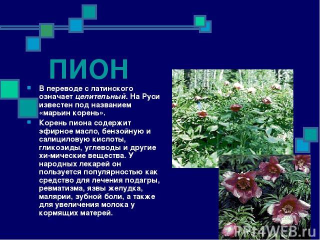 ПИОН В переводе с латинского означает целительный. На Руси известен под названием «марьин корень». Корень пиона содержит эфирное масло, бензойную и салициловую кислоты, гликозиды, углеводы и другие хи мические вещества. У народных лекарей он пользуе…