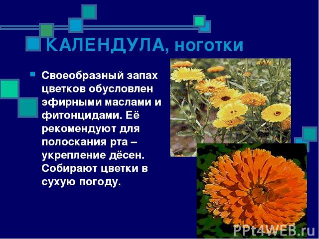 КАЛЕНДУЛА, ноготки Своеобразный запах цветков обусловлен эфирными маслами и фитонцидами. Её рекомендуют для полоскания рта – укрепление дёсен. Собирают цветки в сухую погоду.