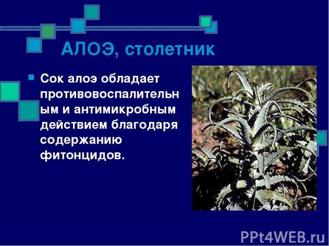 АЛОЭ, столетник Сок алоэ обладает противовоспалительным и антимикробным действием благодаря содержанию фитонцидов.