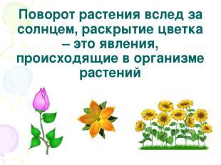 Поворот растения вслед за солнцем, раскрытие цветка – это явления, происходящие