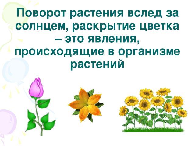 Поворот растения вслед за солнцем, раскрытие цветка – это явления, происходящие в организме растений