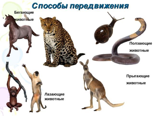 Бегающие животные Ползающие животные Прыгающие животные Лазающие животные Способы передвижения