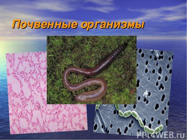 Почвенные организмы