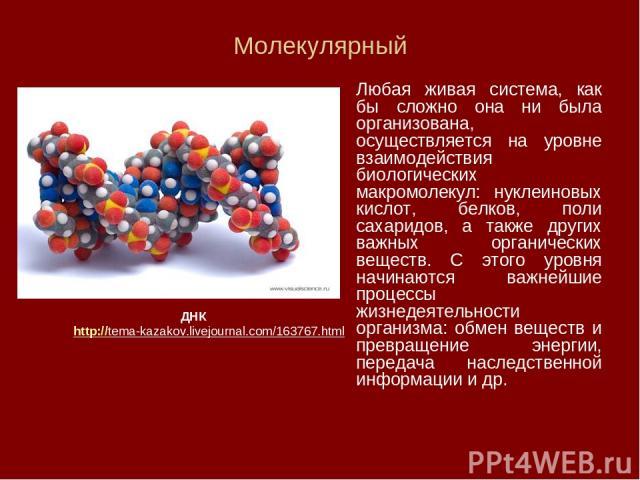 Молекулярный Любая живая система, как бы сложно она ни была организована, осуществляется на уровне взаимодействия биологических макромолекул: нуклеиновых кислот, белков, поли сахаридов, а также других важных органических веществ. С этого уровня начи…