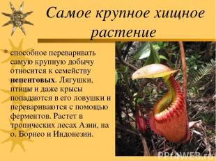 Самое крупное хищное растение способное переваривать самую крупную добычу относи