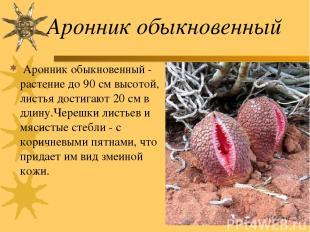Аронник обыкновенный Аронник обыкновенный - растение до 90 см высотой, листья до