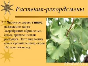 Растения-рекордсмены * Японское дерево гинко, называемое также «серебряным абрик