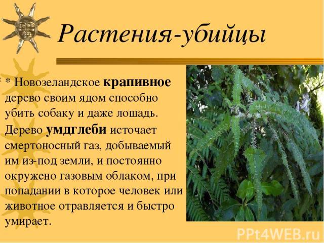Растения-убийцы * Новозеландское крапивное дерево своим ядом способно убить собаку и даже лошадь. Дерево умдглеби источает смертоносный газ, добываемый им из-под земли, и постоянно окружено газовым облаком, при попадании в которое человек или животн…