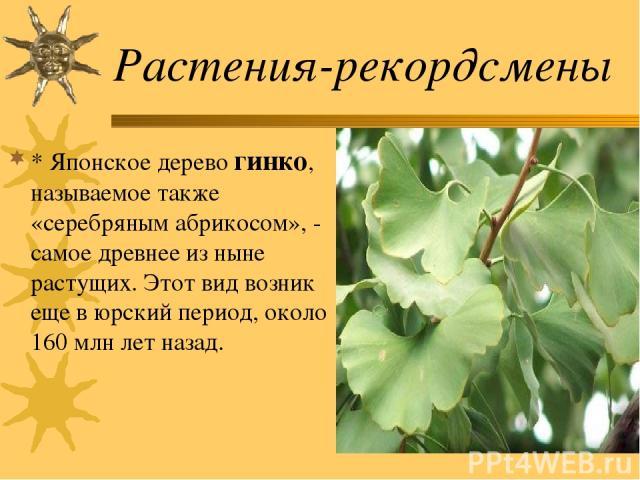 Растения-рекордсмены * Японское дерево гинко, называемое также «серебряным абрикосом», - самое древнее из ныне растущих. Этот вид возник еще в юрский период, около 160 млн лет назад.