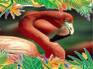 Самые длинные ноги- у малого фламинго. Высота птицы 1,5 метра, а длина ног до 6