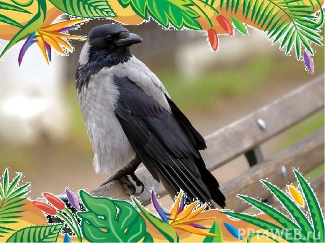 Самая умная птица- ворона. Вороны — прекрасные подражатели: они могут повторять разнообразные звуки и слова человеческой речи. Лексикон некоторых особей включал в себя более 150 слов Этих птиц можно видеть на обочинах европейских автострад. Дело в …