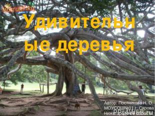 Удивительные деревья Автор: Постникова Н. О. МОУСОШ№11 г. Сарова Нижегородской о