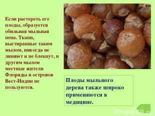Плоды мыльного дерева также широко применяются в медицине. Если растереть его пл
