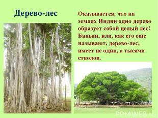 Дерево-лес Оказывается, что на землях Индии одно дерево образует собой целый лес