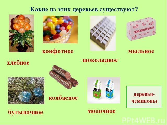 Какие из этих деревьев существуют? хлебное колбасное молочное бутылочное конфетное шоколадное мыльное деревья-чемпионы