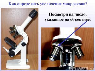 Как определить увеличение микроскопа? Посмотри на число, указанное на объективе.