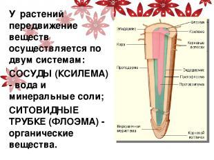 У растений передвижение веществ осуществляется по двум системам: СОСУДЫ (КСИЛЕМА