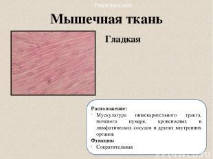 Гладкая Мышечная ткань Расположение: Мускулатура пищеварительного тракта, мочево