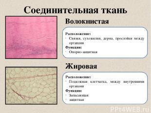 Соединительная ткань Волокнистая Жировая Расположение: Связки, сухожилия, дерма,